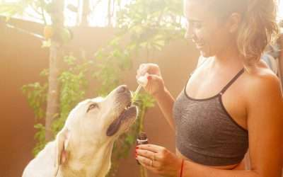hemp seed oil and your pets – LOOKING AFTER YOUR BEST MATE